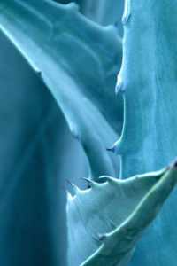Plant Notebook Covers - Aloe Blue-Gray